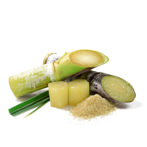 Sugar Cane Extract - Saccharum Officinarum